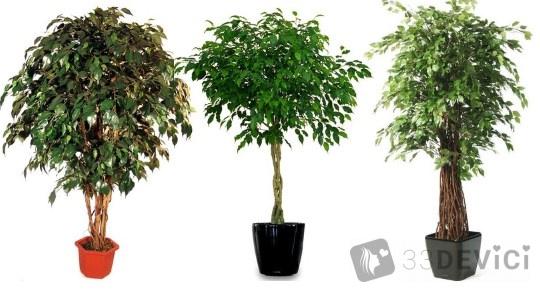 как ухаживать за комнатным растением