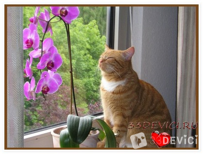 Чтобы орхидея росла хорошо, нужно обеспечить ей хорошее освещение