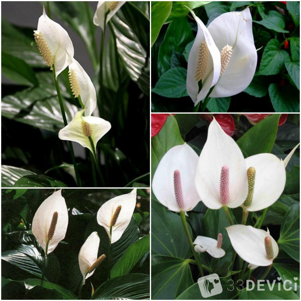 komnatnye-jenskie-cvety-3