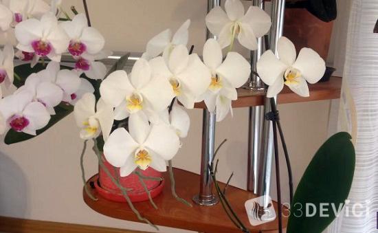 уровень влажности необходимый для орхидеи