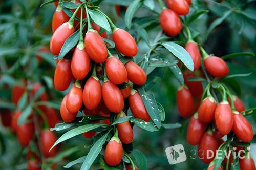 фото красных ягодок