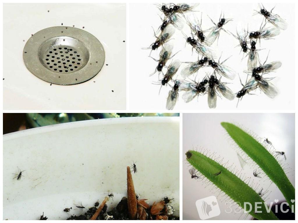 как найти источник насекомых дома