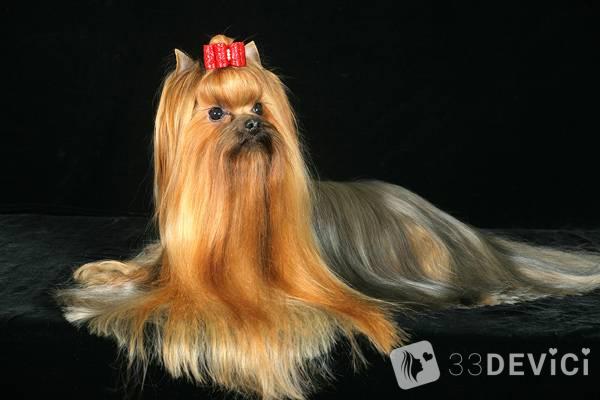фото собачки с длинной шерстью