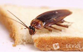 Как избавиться от нашествия тараканов