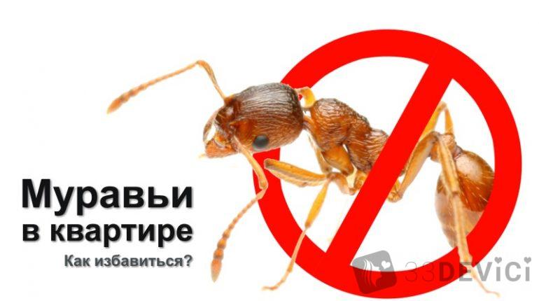 kak-izbavitsya-ot-muravev-v-kvartire-v-domashnikh-usloviyakh-770x430