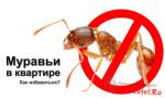 Как избавиться от муравьёв в квартире — советы бывалого