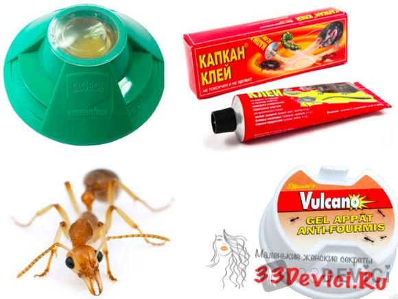 Ловушки для муравьёв