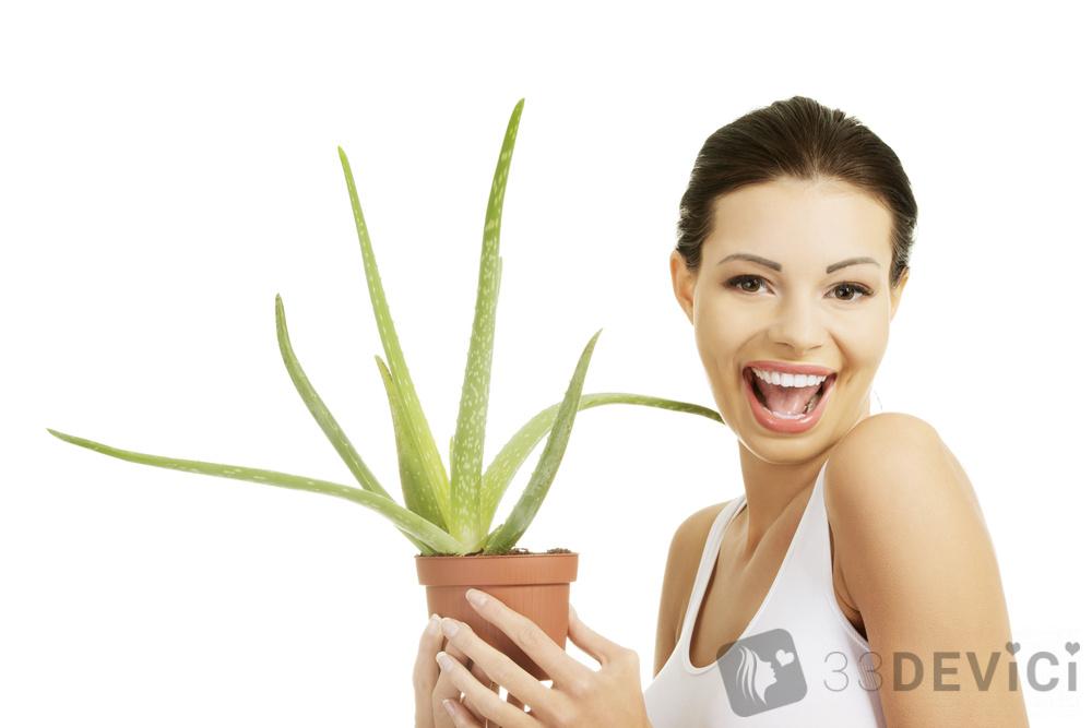 лечебные свойства комнатных растений