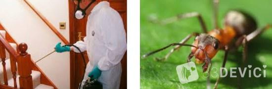 Как найти муравьиное гнездо или матку