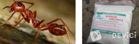 Как избавится от муравьёв народными методами