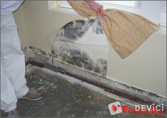 Способы борьбы с плесенью в квартире