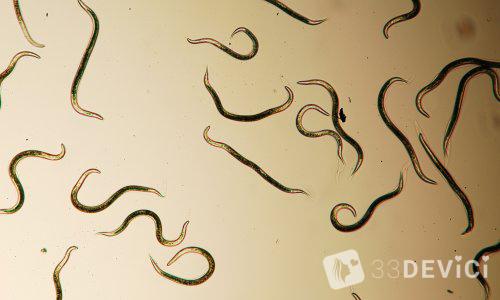 chelovecheskie-parazity