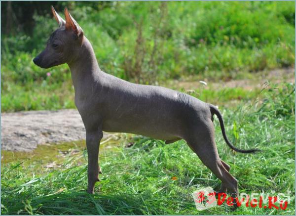 Отличия породы от других собак