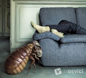 мелкие насекомые дома