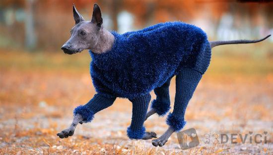 собака ксолоитцкуинтли