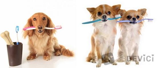 как отбелить клыки собаке