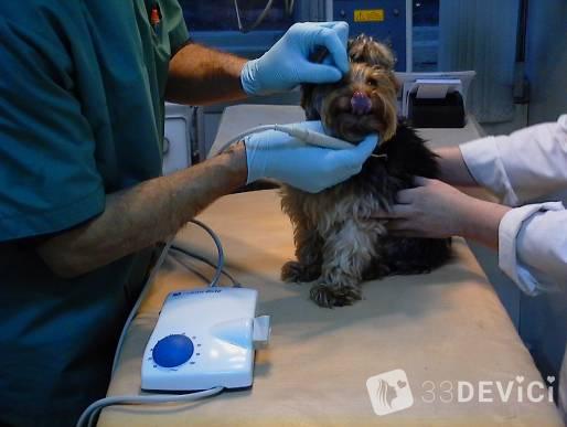 Пародонтоз у собак как лечить 5
