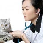 Глисты у кошек: причины, симптомы, способы лечения