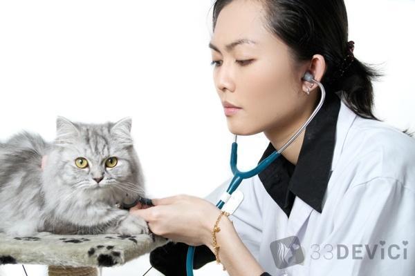 профилактика кошек от глистов