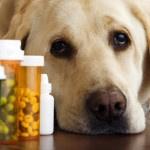 Глисты у собак: причины, симптомы, способы лечения