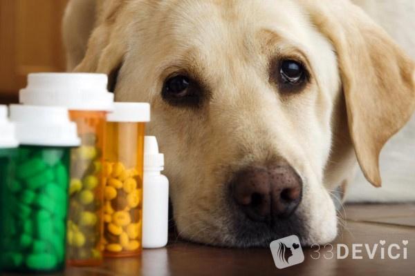 Глисты у щенка полная информация о симптомах и способах лечения