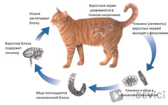 профилактика от червей паразитов