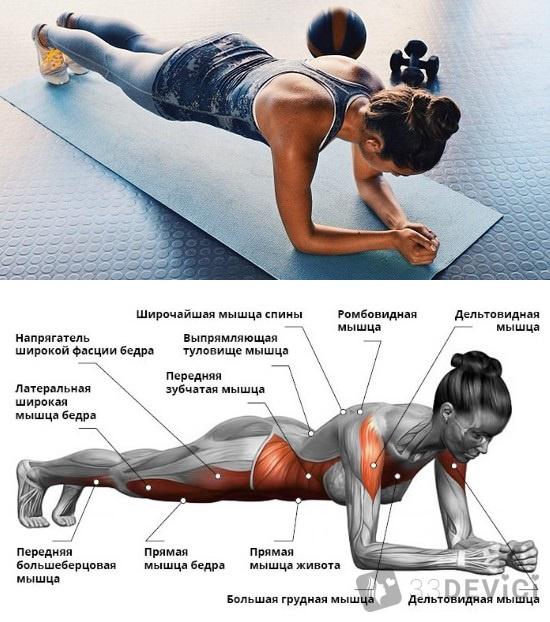 мышцы работающие во время планки