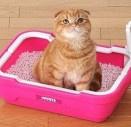 как отучить кота гадить в неположенном месте