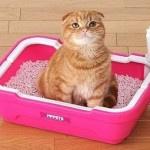 Как отучить кота гадить где попало в доме и квартире
