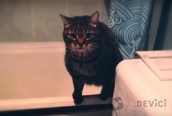 как отучить кота гадить в ванну