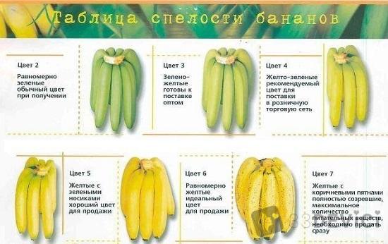 хранение бананов в домашних условиях