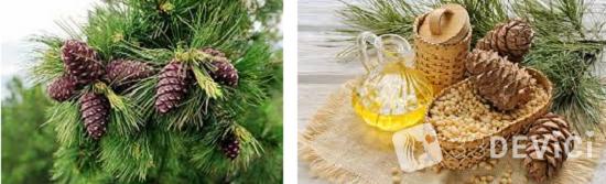 эфирное масло кедра свойства и применение