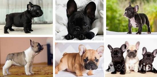 как заботиться о маленьких щенках