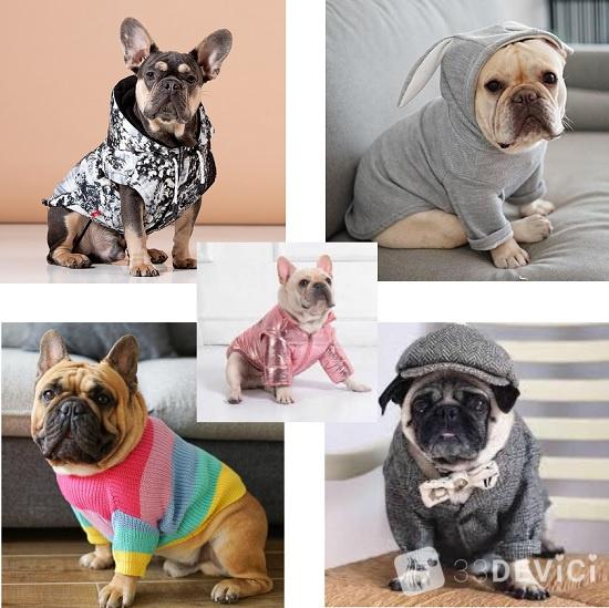 одежда для выгулки собак