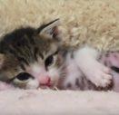 Котенок в доме: чем кормить