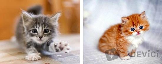 чего боятся маленькие котики
